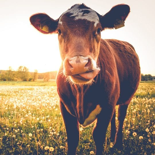 How to Choose the Best Animal Feed Additive