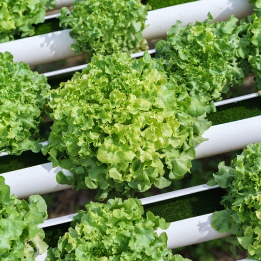 How Perlite Is Used for Hydroponic Gardens