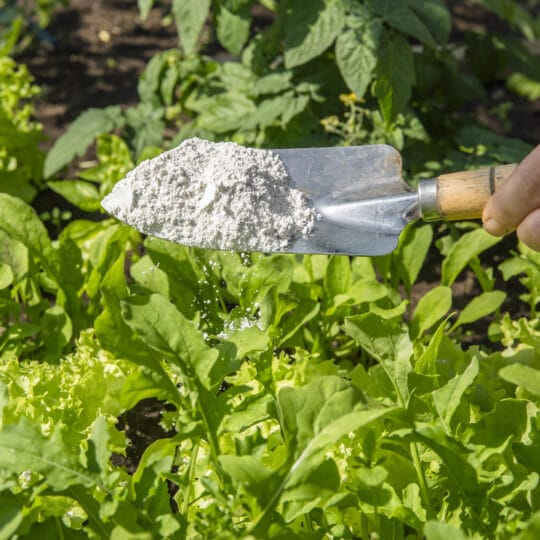 Diatomaceous Earth as a Source of Plant Available Silica